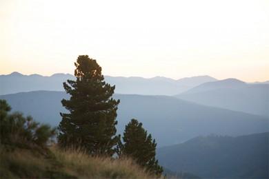 Alm Chalet Auszeit - Lungau - Karneralm - Pflanzen- und Tierwelt